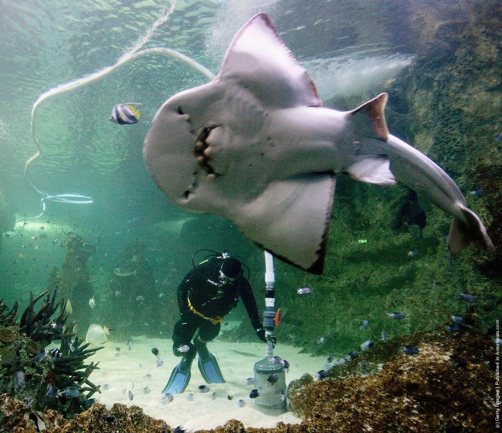 membersihkan_aquarium