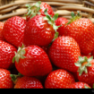 menanam_strawberry
