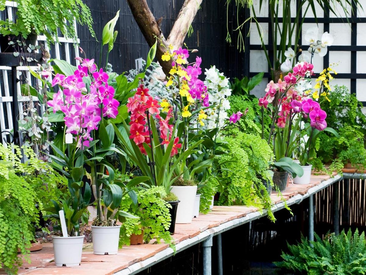 menanam_bunga-anggrek