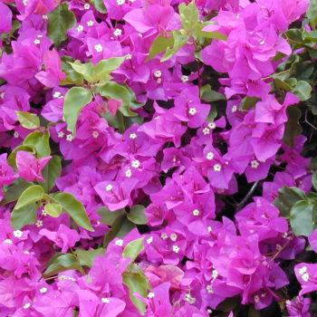 menanam_bunga_kertas